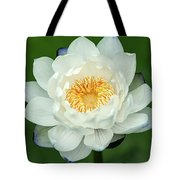 Water Lily In Bloom Tote Bag