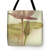 Water Lily  Nymphaea Zanzibarensis Tote Bag