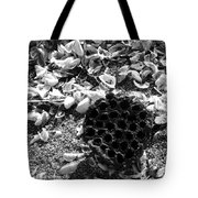 Water Lotus And Shells In Bw Tote Bag