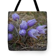 Watercolor Pasque Flowers Tote Bag