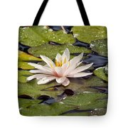 Waterlily On The Water Tote Bag