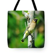 Wax Wing In A Small Branch  Tote Bag