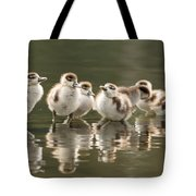 We Are Family - Seven Egytean Goslings In A Row Tote Bag