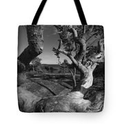 Weather Beaten Pine Tree And Ocean Bay - Monochrome Tote Bag