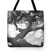 Weather Beaten Pine Tree And Sun - Monochrome Tote Bag
