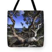 Weather Beaten Pine Tree At The Coast Tote Bag