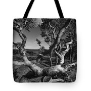 Weather Beaten Pine Tree At The Coast - Monochrome Tote Bag