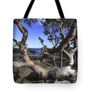 Weather Beaten Pine Tree At The Swedish High Coast Tote Bag