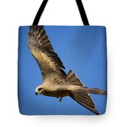 Wedgetail Eagle Flight Tote Bag