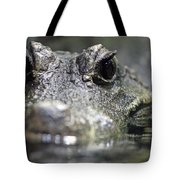 West African Dwarf Crocodile - Captive 03 Tote Bag