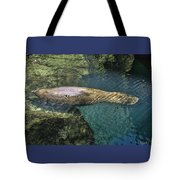 West Indian Manatee Tote Bag