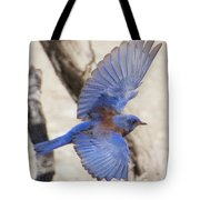 Western Bluebird 2 Tote Bag