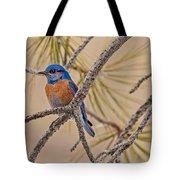 Western Bluebird Male In A Pine Tree.  Tote Bag