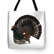 Western Capercaillie Transparent Tote Bag