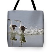 Western Grebe On Lake Tote Bag