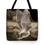 Western Long-eared Myotis Drinking Tote Bag
