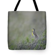 Western Meadowlark Morning Tote Bag