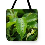 Wet Bushes Tote Bag