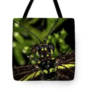 Wet Butterfly Tote Bag