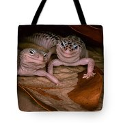 We've Got A Secret - Smiling Leopard Geckos Tote Bag