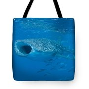 Whale Shark, Ari And Male Atoll Tote Bag by Mathieu Meur