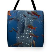 Whale Shark Galapagos Islands Tote Bag
