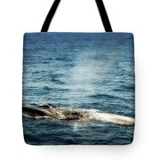 Whale Watching Balenottera Comune 5 Tote Bag