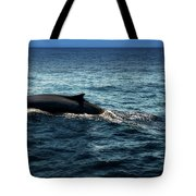 Whale Watching Balenottera Comune 6 Tote Bag