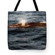 Whale Watching Balenottera Comune 7 Tote Bag