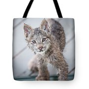 What Are You Tote Bag by Tim Newton