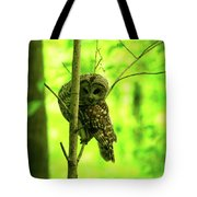 Where Did He Go? Tote Bag
