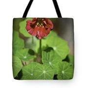 Whirleybird Nasturtium Tote Bag