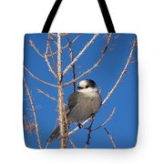 Whiskey Jack Perched On A Winter Larch  Tote Bag