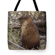 Whistle Pig Tote Bag