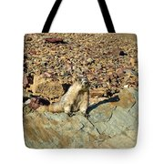 Whistle Pig Of The Rockies Tote Bag