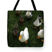 White And Brown Ducks Tote Bag