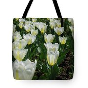 White And Pale Yellow Tulips In A Bulb Garden Tote Bag