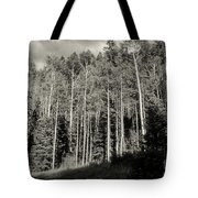 White-barked Birch Forest 3 Tote Bag