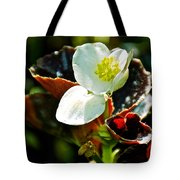 White Begonia At Pilgrim Place In Claremont-california  Tote Bag