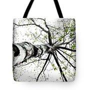 White Birch 2011-1a Tote Bag