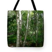 White Birch Tree Tote Bag