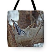 White Breasted Nuthatch - Sitta Carolinensis Tote Bag