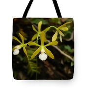 White Butterfly Orchid Tote Bag