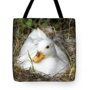 White Call Duck Sitting On Eggs In Her Nest Tote Bag