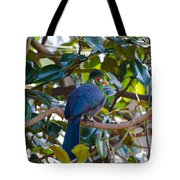 White-cheeked Turaco Tote Bag
