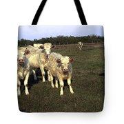 White Cows Tote Bag