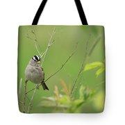 White Crown Sparrow Tote Bag