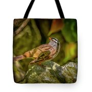 White Crowned Sparrow Tote Bag