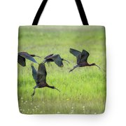 White-faced Ibis Rising, No. 2 Tote Bag