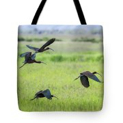 White-faced Ibis Rising, No. 3 Tote Bag